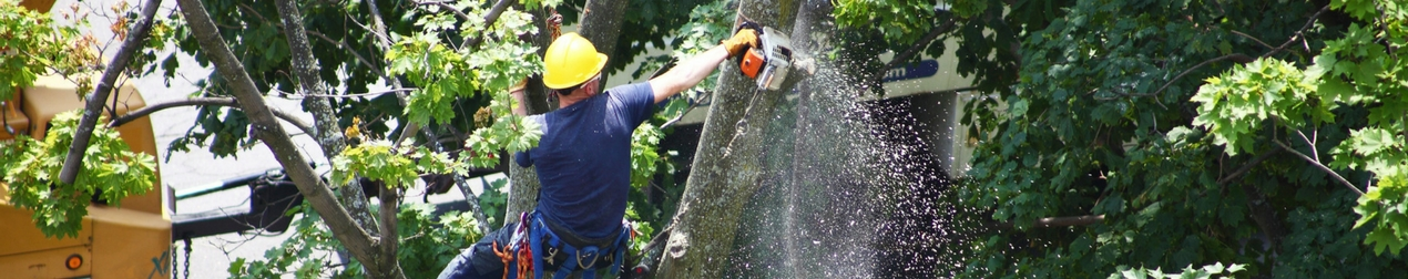 abattage arbre braine l'alleud
