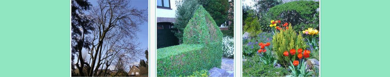 Elagage et jardin authentique anderlecht t l 025215 for Entretien jardin gembloux