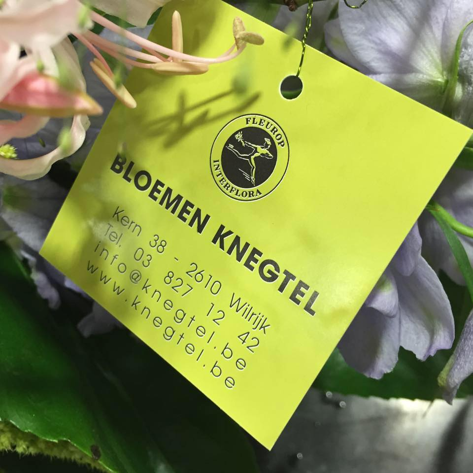Logo Knegtel Bloemen