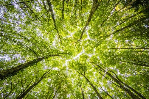 Orez stromov zahŕňa viacero pravidiel, a preto patrí do rúk odborníkov
